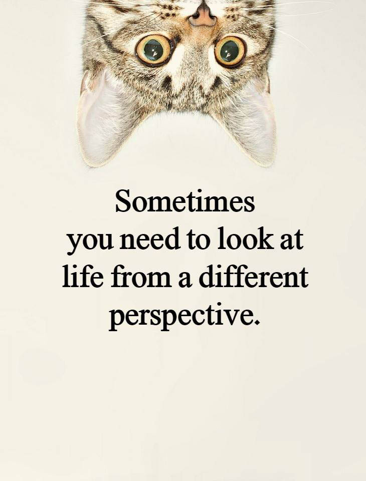 #life #perspective #different #cat Sometimes you need to look from different perspective