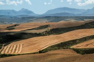 Nature, Outdoors, Land, Agriculture, Field, Countryside, Panoramic, Landscape, Scenery, Soil