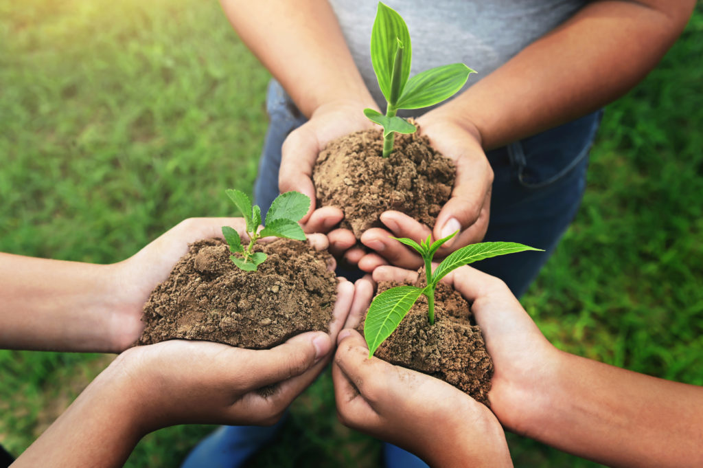 Person, Planting, Outdoors, Soil, Garden, Plant, Sprout, Leaf