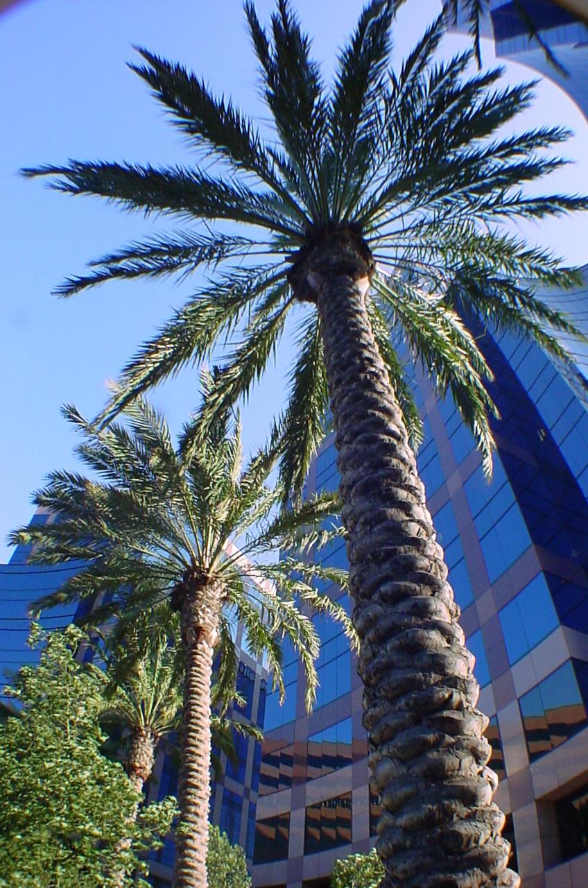 Plant, Tree, Arecaceae, Palm Tree, Summer, Building, Bird, Animal