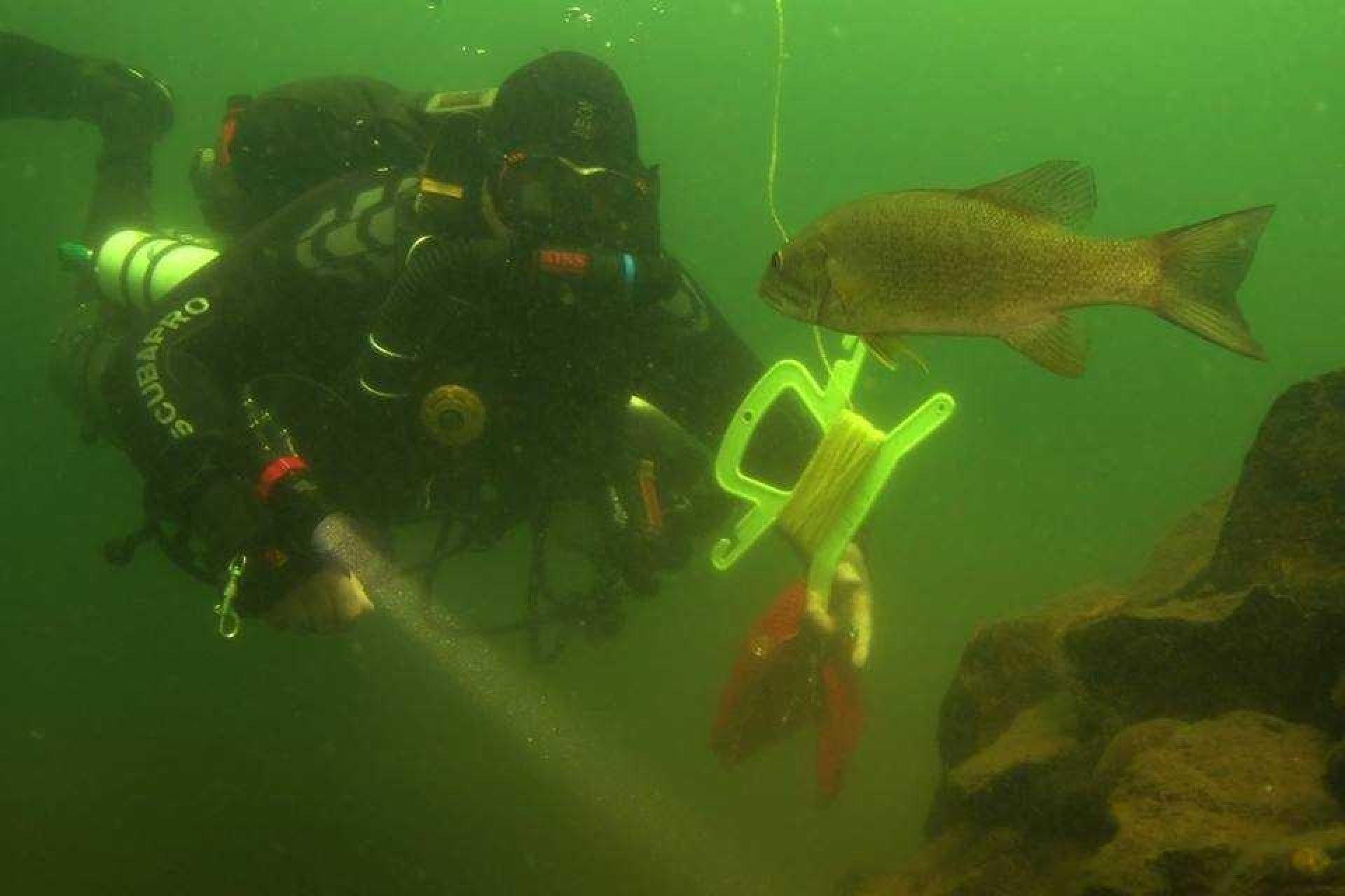 Scuba Diver Meets Fish