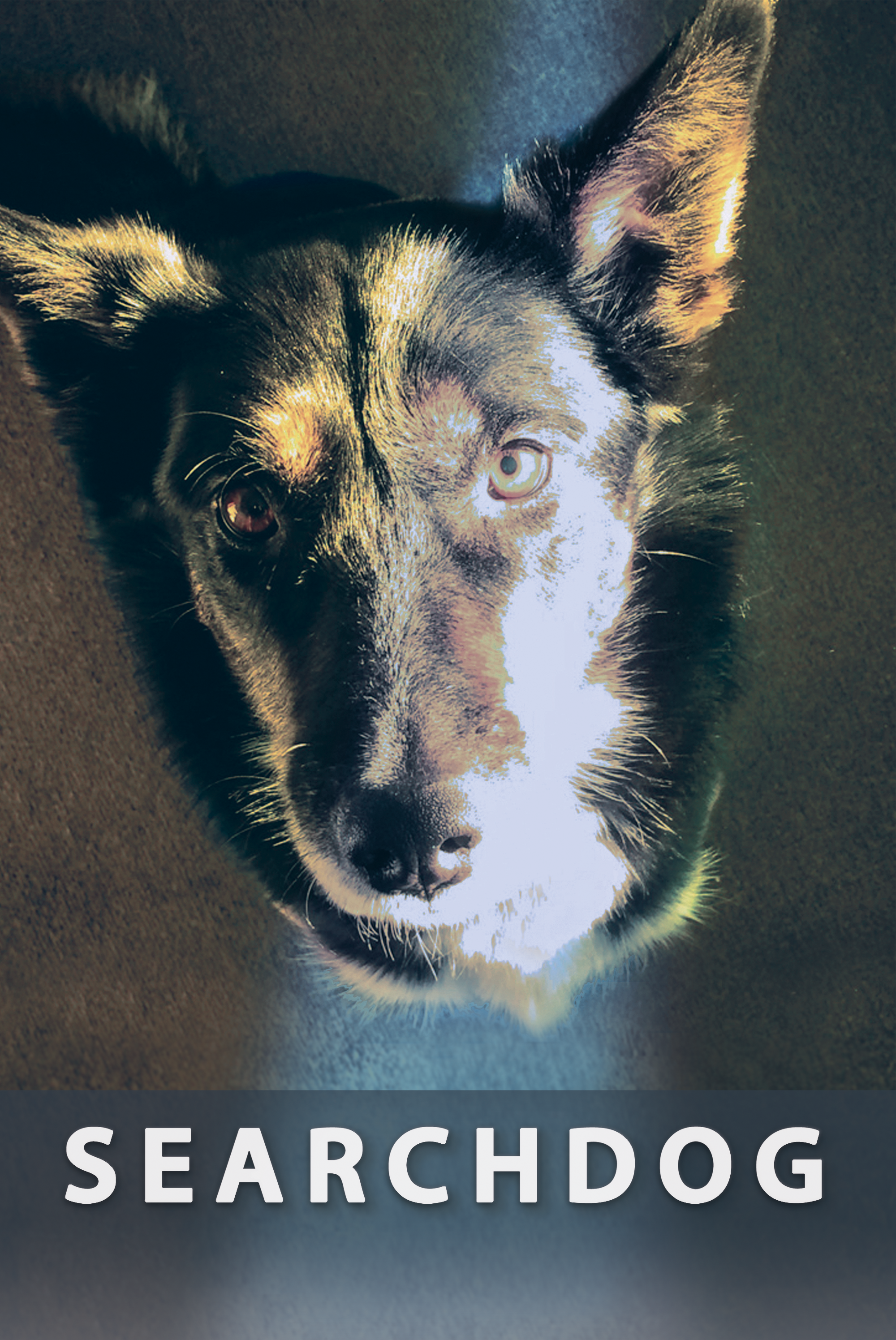 Searchdog Screening with Mary Healey Jamiel