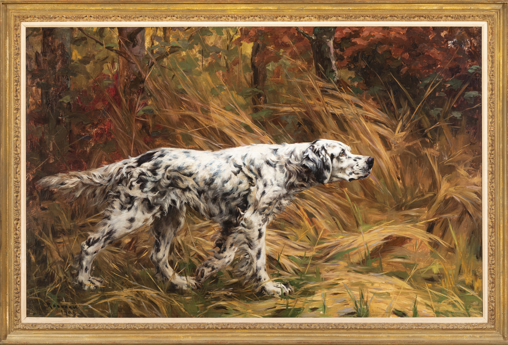 English Setter in a Field