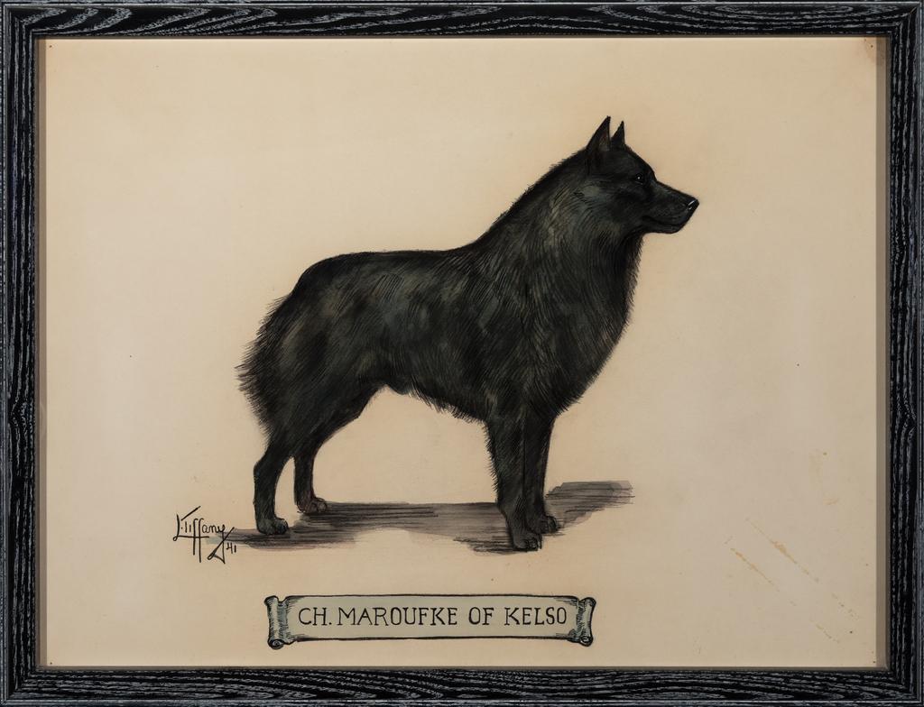 Ch. Maroufke of Kelso