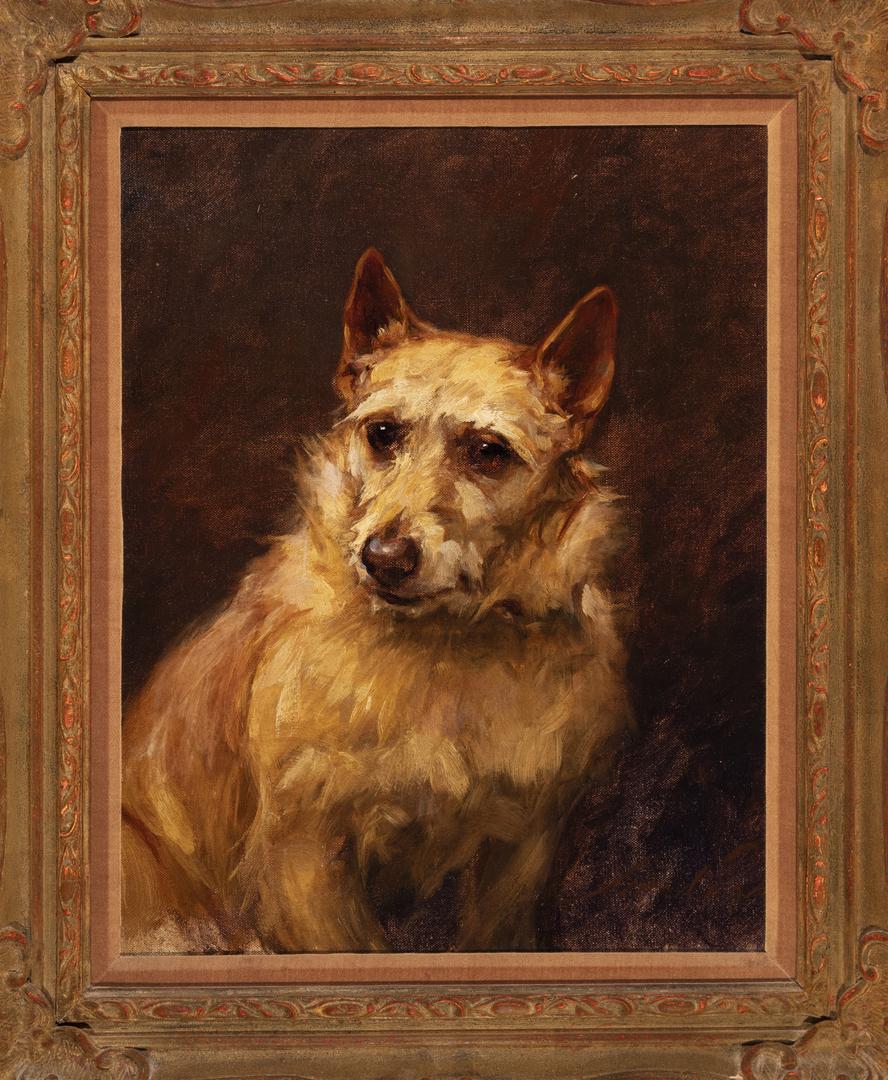 A Norwich Terrier