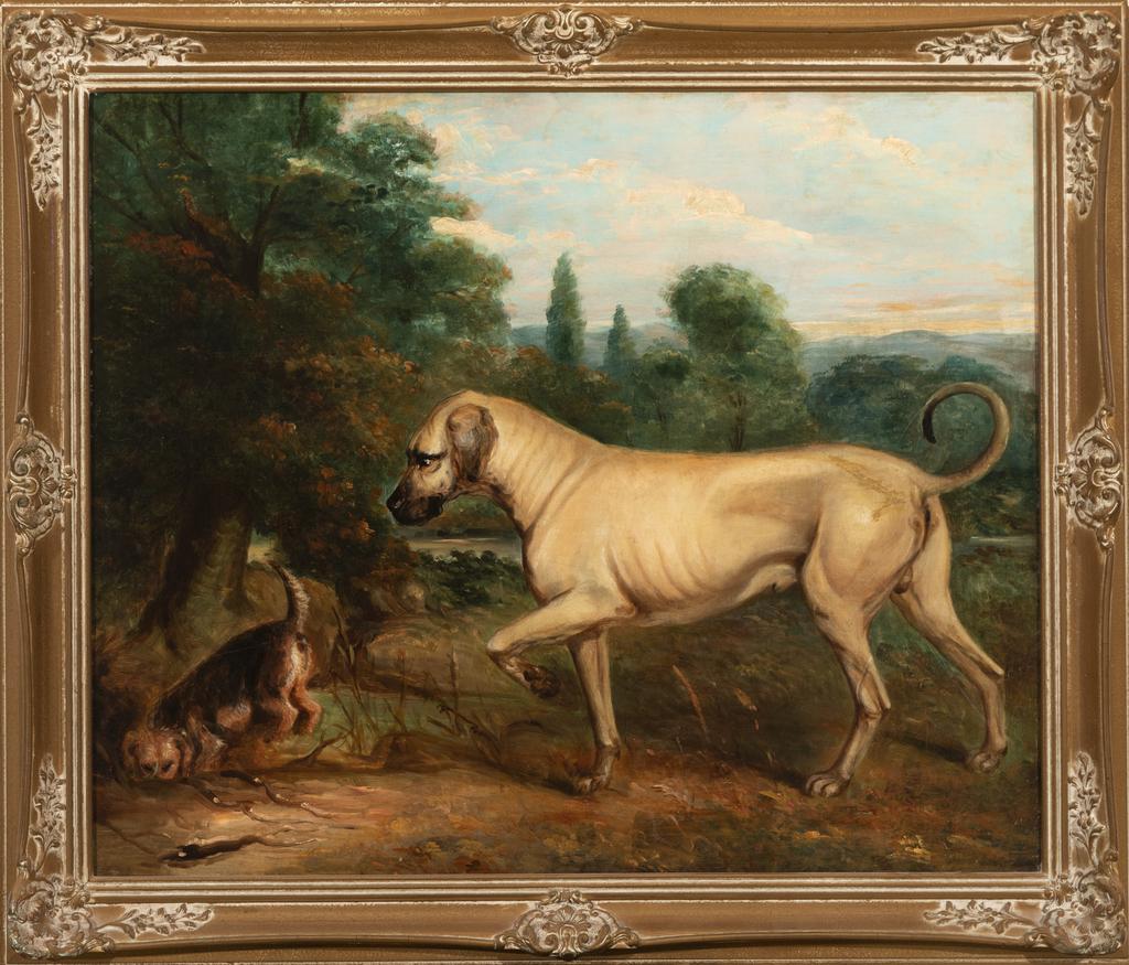 Mastiff Type Digging with Terrier