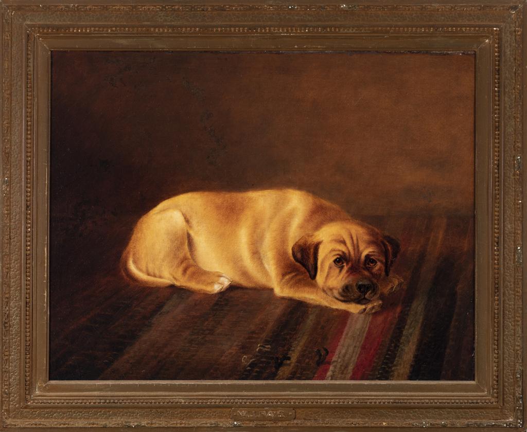 Mastiff Puppy Resting