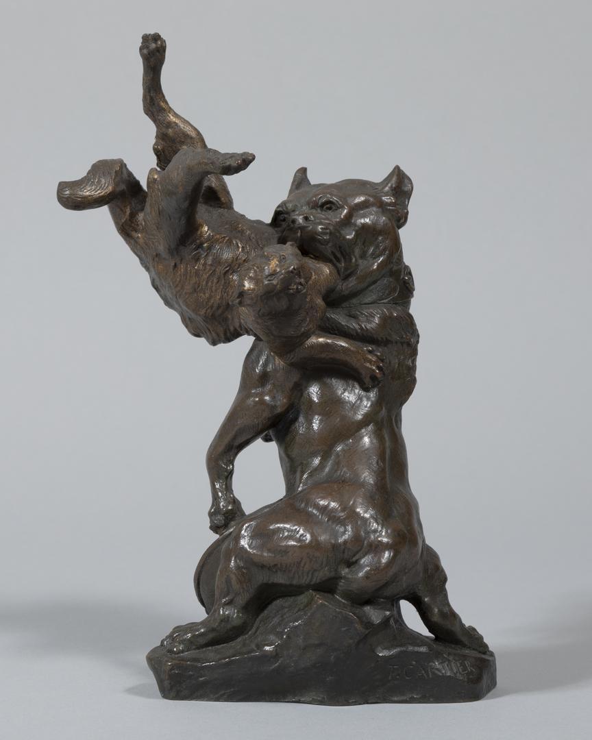 Mastiff Fighting Cat