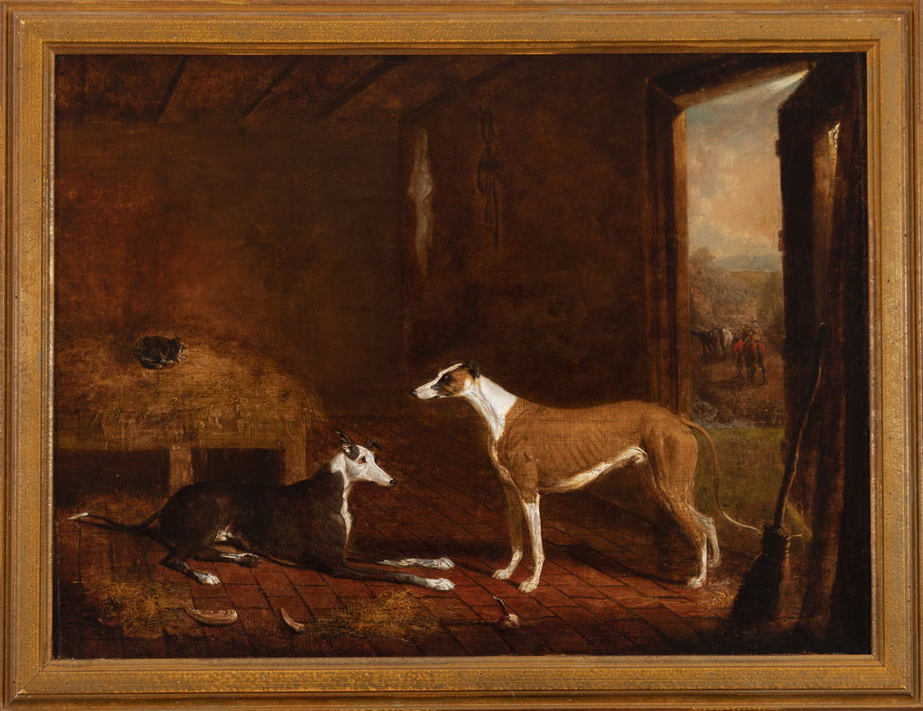 Greyhounds in Stable