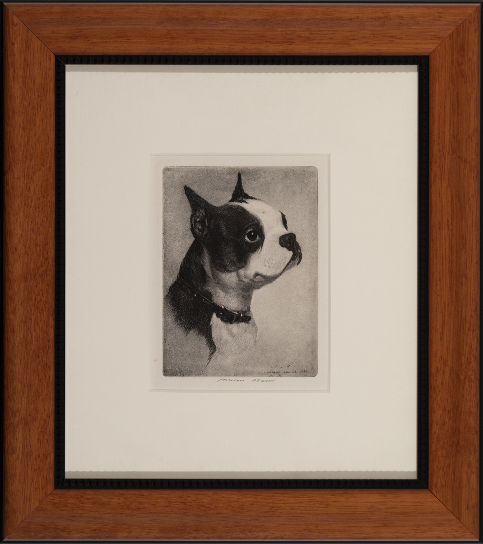 Boston Terrier (head study)