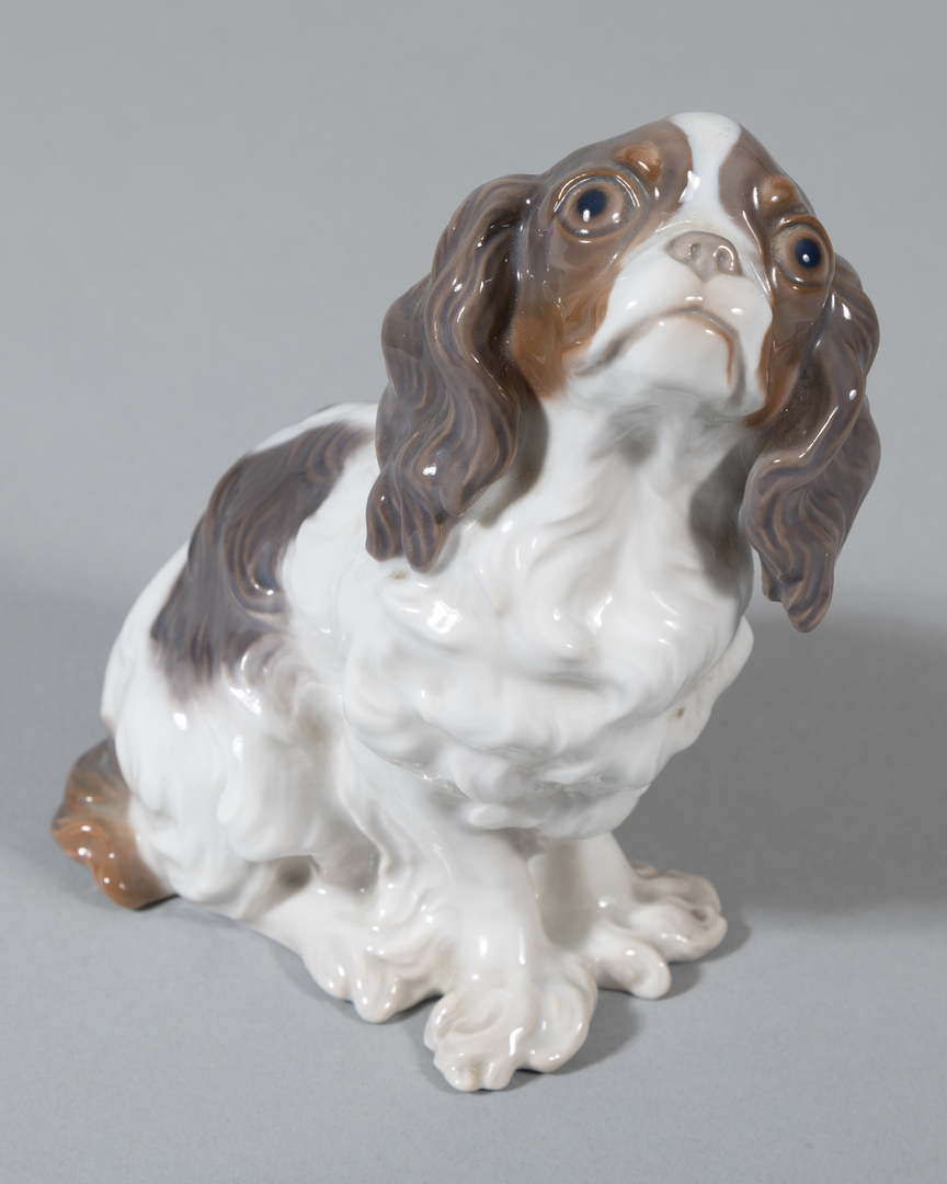 English Toy Spaniel Looking Up