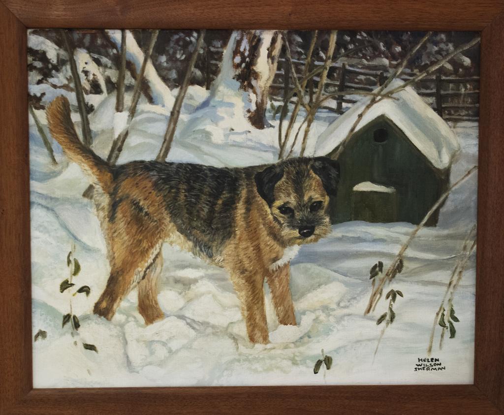 Border Terrier in snow