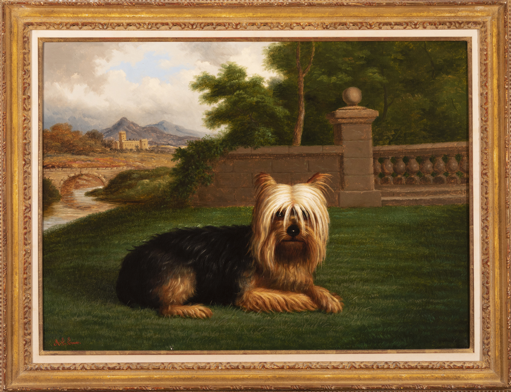 Recumbent Yorkshire Terrier on Lawn