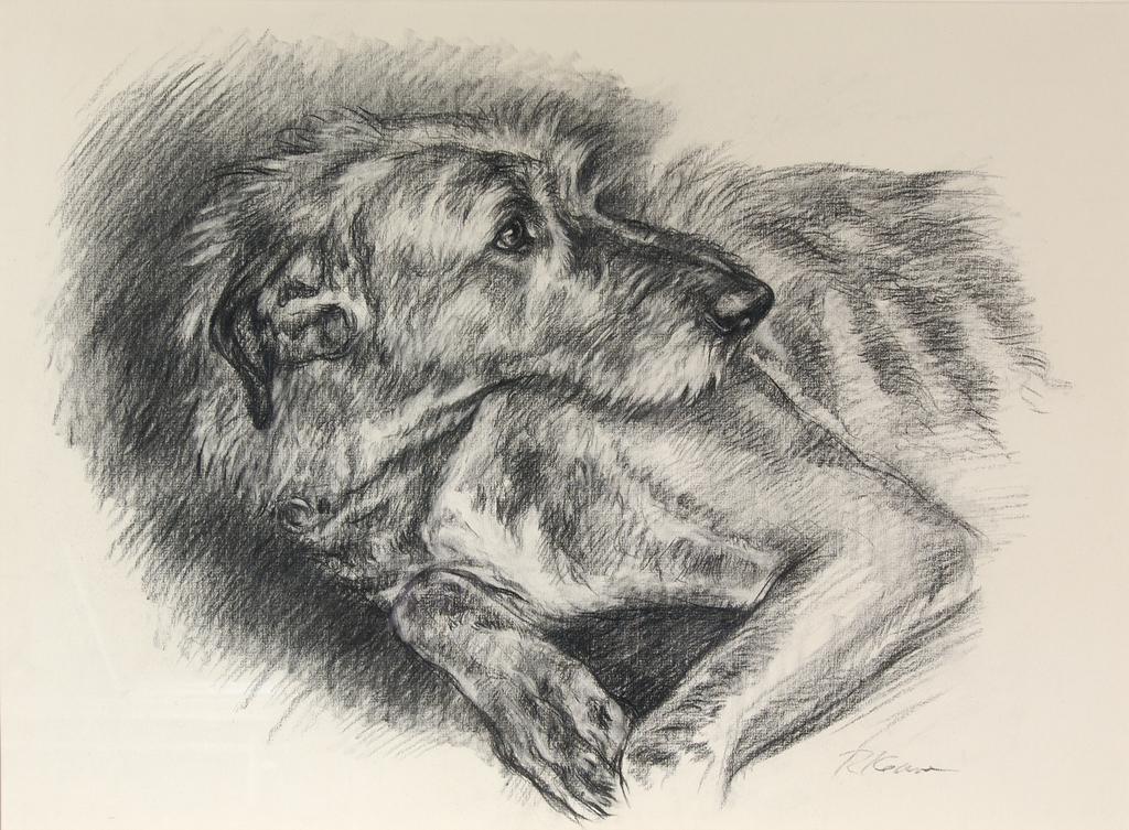 Irish Wolfhound Repose