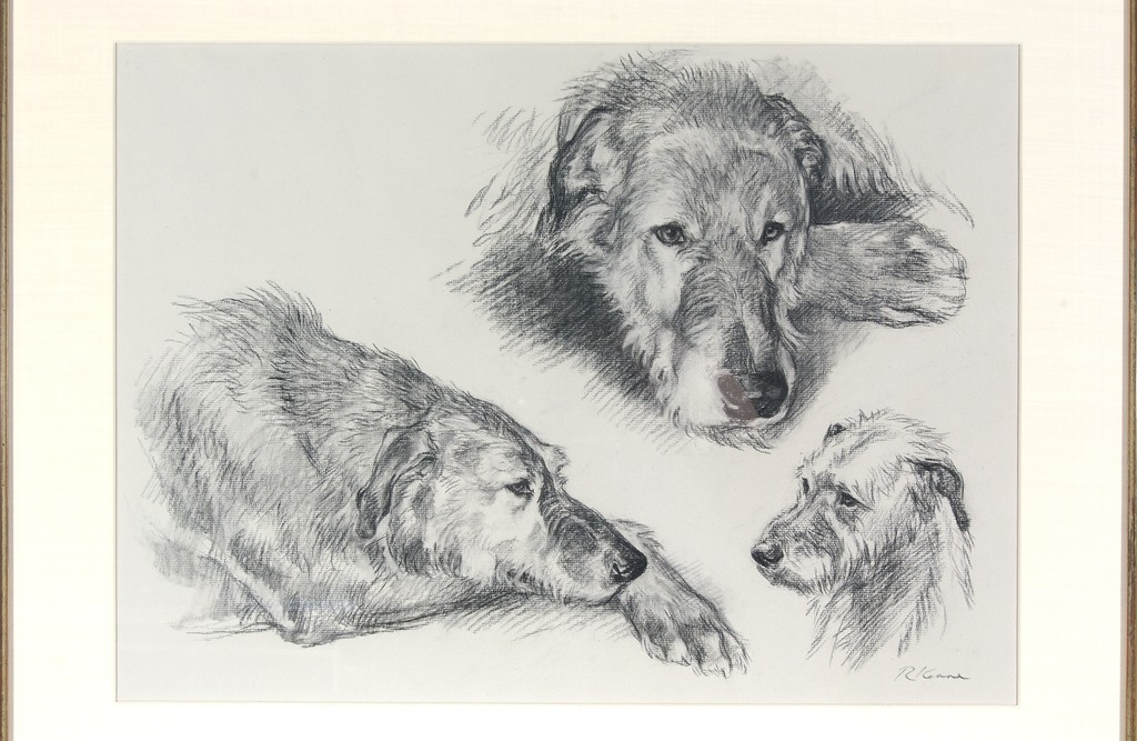 Irish Wolfhound head study