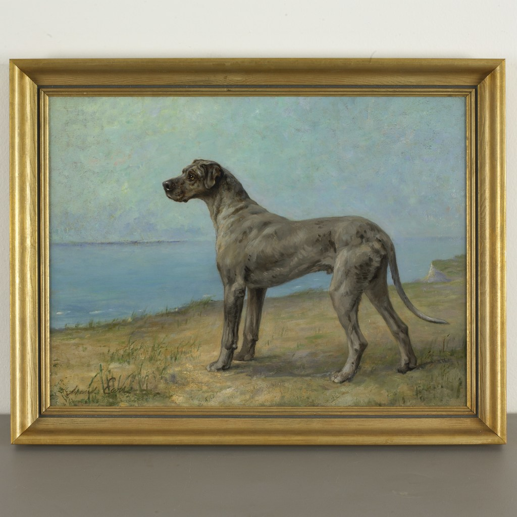 Great Dane Standing at the Shore