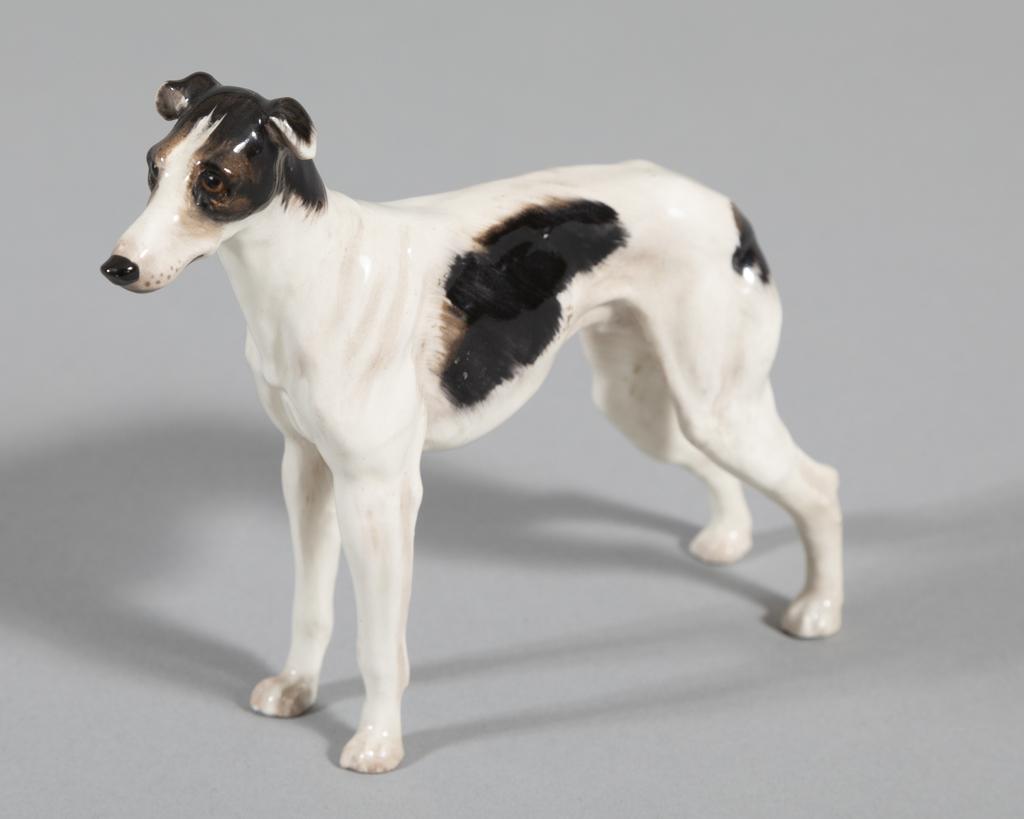 Greyhound- bk/wt
