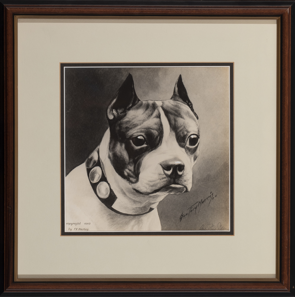 Boston Terrier (prt F.E.Burley)