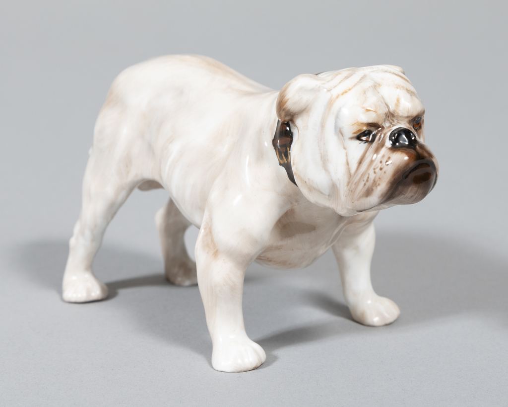 Bulldog, standing,wht/brown collar