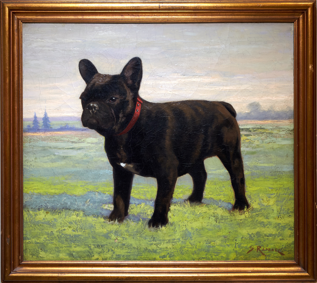 Meet the Breeds®: French Bulldog