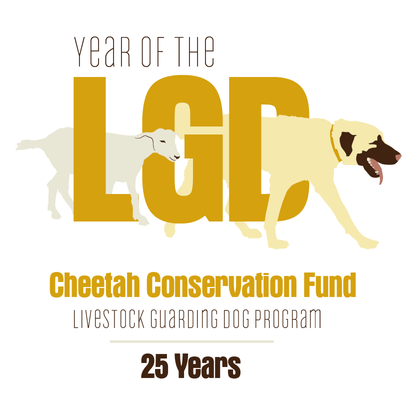 Cheetah Conservation Fund: Dogs Saving Cats Lecture