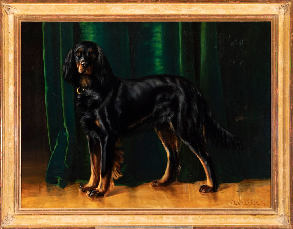 MEET THE BREEDS®: Gordon Setter